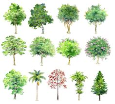 Hand-painted PSD Tree Blocks 1 | Free Cad Blocks & Drawings Download Center