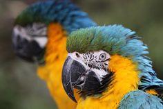 Für ein paar Lacher zwischendurch: tierische Witze | Kuriose Tierwelt