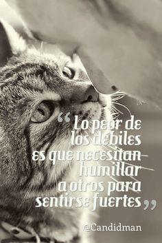 Lo peor de los débiles es que necesitan humillar a otros para sentirse fuertes.  @Candidman     #Frases Candidman Reflexión @candidman