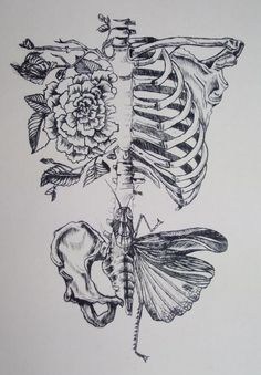 Soft Anatomy by Rebecca Ladds - #tattoo #idea #skeleton
