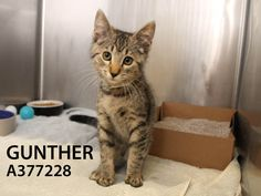 Adopted! Gunther has found his forever home. 9/15/15.