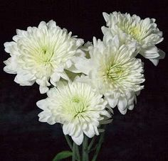 45 Best Whites Images White Flowers Bunch Of Flowers Vases