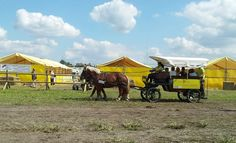 Jusqu'au 7 septembre inclus, les Jeunes Agriculteurs, organisateurs de l'évènement attendent 250.000 visiteurs sur leur salon de l'agriculture en plein air