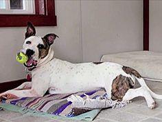 Season 10 Wild About Animals: Wild Spanish Corollas and Pennsylvania Canines