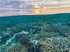 Foto do Google Maps mostra pôr do sol em recife de coral na ilha Wilson, na Austrália