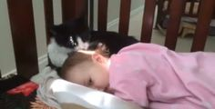 Why Spend Money On A Babysitter When You Can Just Adopt A Cat instead? [VIDEO]