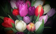 Bouquet tulipes | Flickr - Photo Sharing!