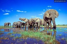 Etosha National Park | Namibia #safari #adventures #africa
