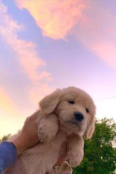 Super Cute Puppies, Cute Baby Dogs, Cute Little Puppies, Cute Dogs And Puppies, Cute Little Animals, Cute Funny Animals, Doggies, Tiny Puppies, Cute Dog Pic