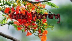 good morning Good Morning Saturday Wishes, Happy Saturday Images, Saturday Pictures, Morning Pictures, Morning Wish, Good Morning Picture, Good Morning Images, Good Morning Quotes, Good Morning Photos Download