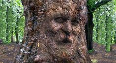 Photoshop CS 6 Extended tutorial showing how to transform & camouflage someone's face onto the gnarly bark of a century-old, tree trunk. Tree trunk file: htt...