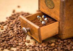 Coffee Farm, The Fool, Class Ring, Sapphire, Rings, Jewelry, Photo Art, Jewlery, Jewerly