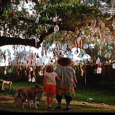 Awesome Bottle Tree.    From movie: Because of Winn Dixie