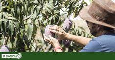 Once productores de fruta y verdura a los que comprar directamente   El Comidista EL PAÍS Pitaya, Detox, Food, Shopping, Fruits And Vegetables, Farmers, Direct Sales, Vegetable Gardening, Urban