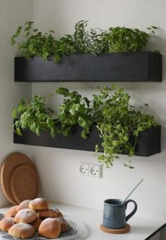 Black and basic wall boxes are an ideal option for growing herbs indoors within easy reach of your kitchen and preparation surface. Grow your own herbs all year long in a well-lit area saving you money at the market and keeping your space green and happy! Kitchen Herbs, Herb Garden In Kitchen, Diy Herb Garden, Home And Garden, Green Garden, Wall Herb Garden Indoor, Herbs Garden, Garden Pests, Plants In Kitchen