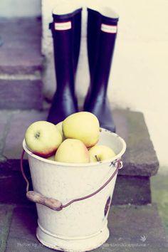 Fräulein Klein Blogspot - apple harvest