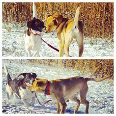 Boys will be boys! #evasplaypupsPA #dogs #dogscamp #doggievacays #playtime #sillypooches #badassbk #adoptdontshop #rescuedog #firstsnow #autumn #sweaterweather #endlessmountains #mountpleasant #PA #pennsylvania