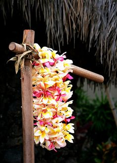 Plumeria leis in Hawaii - For May Day and graduations