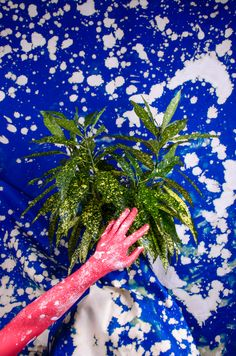 pinkmorro - cocolia #artdirection #photography #surrealist