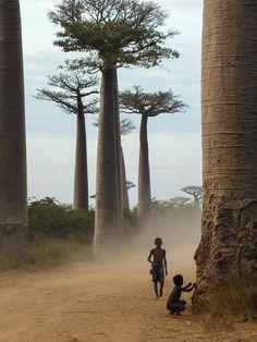 : Arbres : symboles de vie et de durée. Madagascar