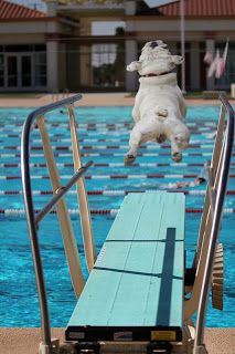 Somehow, you get the impression that this dog is ecstatic about flinging himself off that diving board...