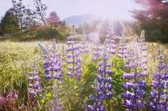 Planting Wildflowers: Top Picks for Fall - Sunset Magazine