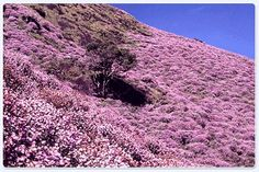 Munnar is blessed with a rich variety of flora and fauna. Situated about 1600 mts above sea level, Munnar is well known for its vast expanse of Neelakurinji http://godwinholidays.com/