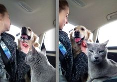 When this dog annoyed this cat:   31 Of The Most Dog Things To Ever Happen