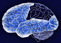 Neuromodelización: así quieren las matemáticas curar tu cerebro