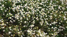 A natureza a brilhar! Primavera de 2017