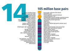 """""""The chromosome image below is the online version of chromosome 14 depicted on the Human Genome Landmarks poster. """" Can choose any chromosome or order poster. Science Chemistry, Science Education, Teaching Science, Dna Research, Research Images, Biology Lessons, Science Lessons, Z Dna, Molecular Genetics"""