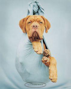Rachael Hale Photography | Rachael Hale photos de chiens - Page 3