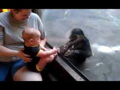 Baby Chimpanzee Vs Baby