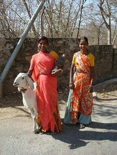 Udaipur Goat herders