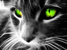 Green-cat-eyes.jpg (1600×1200)