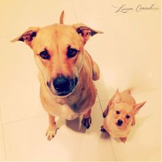 the terrible twosome: chloe + fitz #dogs