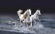 WHITE HORSES - stars, jumps, white, water, beach, horses, ocean, sky, night
