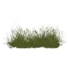 grass-under-water ❤ liked on Polyvore featuring home, home decor, floral decor, grass, plants, nature, tubes, flowers, backgrounds and scenery