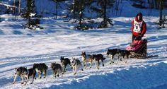 Iditarod-Alaska