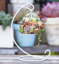 This pretty mini birdcage is now available at Only one. This pretty mini Succulents In Containers, Cacti And Succulents, Planting Succulents, Planting Flowers, Terrarium Plants, Succulent Terrarium, Succulent Gardening, Succulent Arrangements, Cactus Y Suculentas