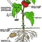Gardening Archives - SHTF Preparedness