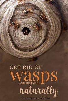 How to Get Rid of Wasps and Hornets