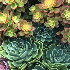 No filter needed for this happy little planter!  Happy Saturday!! #saturdaymorning #saturday #succulent #orangecounty #oc #huntcollective #beauties #beautiful #succulents #love #like #pic #photo #picoftheday #photooftheday #photography #kiwi #aeonium #echiveria #perlevonnurnberg #beach #summer #babes #nature #flowers #perfect #landscape #costamesa #art