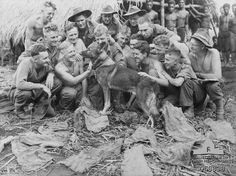 Faria Valley, New Guinea, during WWII---Aussie soldiers making a fuss of Sandy, a military scout dog trained by the United States Dog Detachment for the Australian Army [public domain, Australian War Memorial] The K-9 Corps was created on 13 March 1942.