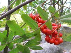 Lasten tähden: Hankala potilas Fruit, Food, Eten, Meals, Diet