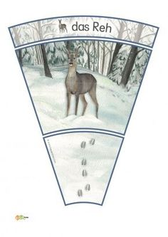 KiGaPortal - for pre-K, kindergarten and elementary school Arctic Animals, Forest Animals, Animal Footprints, Fox Squirrel, Snow Forest, Image Categories, Woodland Party, Kids Education, Teaching Kids