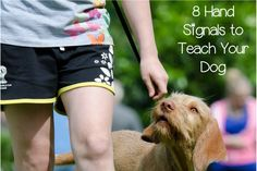Check out 8 of our favorite handy hand signals to teach your dog! They'll really improve your communication & training technique! Puppy Care, Dog Care, Puppies Tips, Dogs And Puppies, Stop Dog Barking, Dog Information, Hand Signals, Dog Items, Dog Training Tips