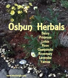 The Orisha of Love, Beauty, Money and Gold is called Oshun. She is honored with a variety of herbs and flowers.