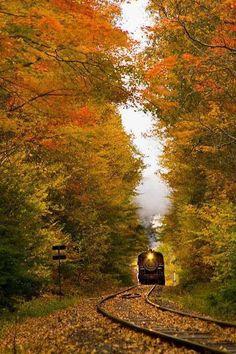 Trein tussen bomen