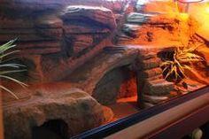 org - Building False Rocks for your Enclosure Terrariums, Terrarium Reptile, Terrarium Diy, Bearded Dragon Habitat, Bearded Dragon Cage, Les Reptiles, Reptiles And Amphibians, Reptile Enclosure, Reptile Cage